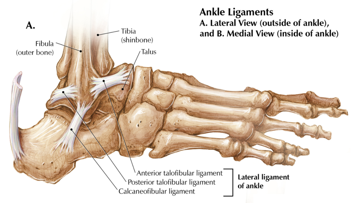 Total Ankle Arthroplasty: Questions for a Specialist